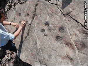 Tetrapod tracks