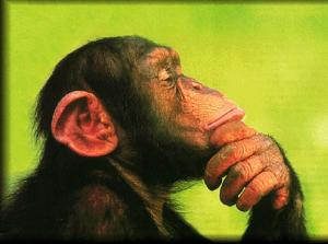 Chimpanzee in deep thought